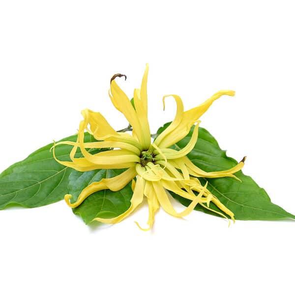 Ylang-ylang etherische olie, biologisch - Prana Puur | Cadeau winkel Roden