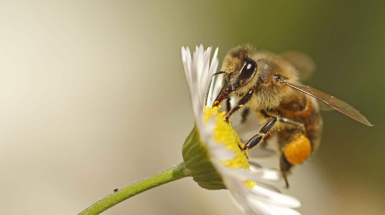 Bijenwas / Honing