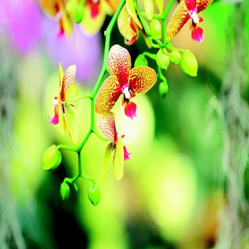 Geurlamp vloeistof Japanese Orchid - Prana Puur | Cadeau winkel Roden